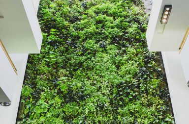 Photo of a wall of green plants