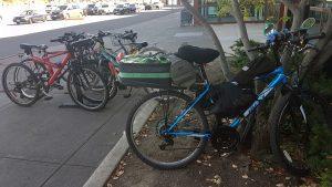 Bikes locked to a bike rack and a tree