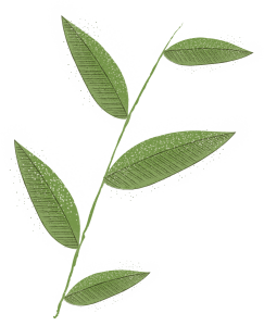 Illustration of leaves on a branch.