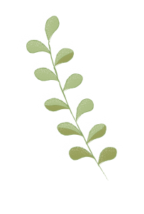 Illustration of leaves on a branch. The leaves are a muted green with some shadowing