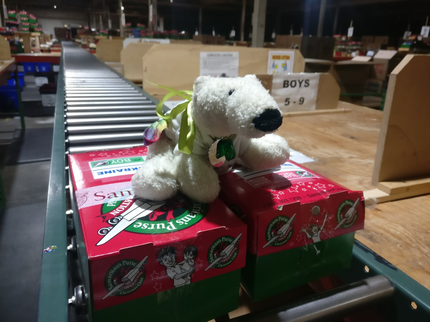 Tikko sits on shoeboxes in the Woodstock warehouse