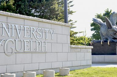 "A sign that says ""University of Guelph"" and a statue of a Gryphon"